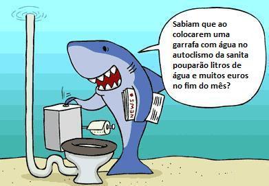 shark104